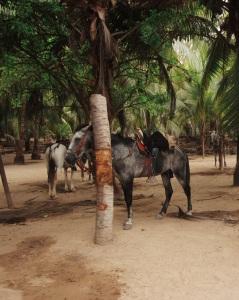 Tayrona La Agencia Travelers