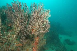 Más corales