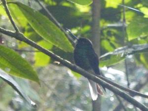 Aves endémicas!! Aquí hay muchas.