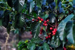 El-Descanso-del-Duque-coffee