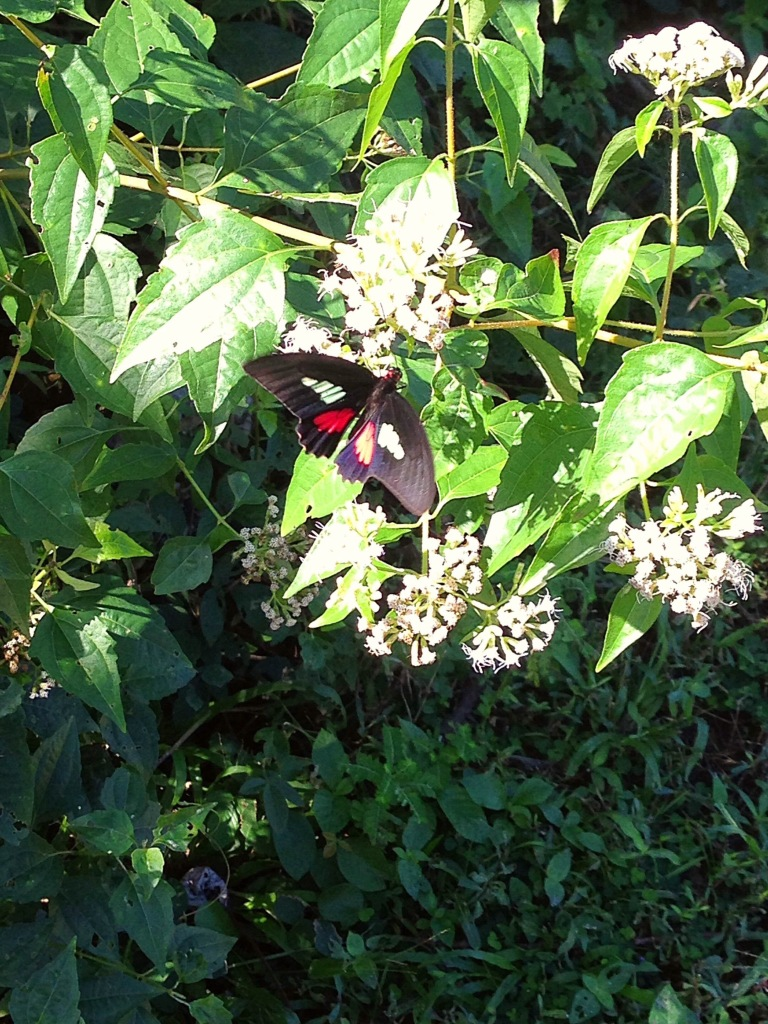 Butterfly in nature at Parque Tayrona
