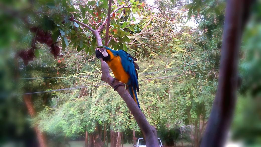 5 - Papageien, Affen, Pfauen: Die Tierwelt in Taironaka ist atemberaubend